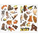 Лесные животные. Осень — фото, картинка — 3