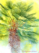 Акварель. Рисуем деревья и листья — фото, картинка — 2
